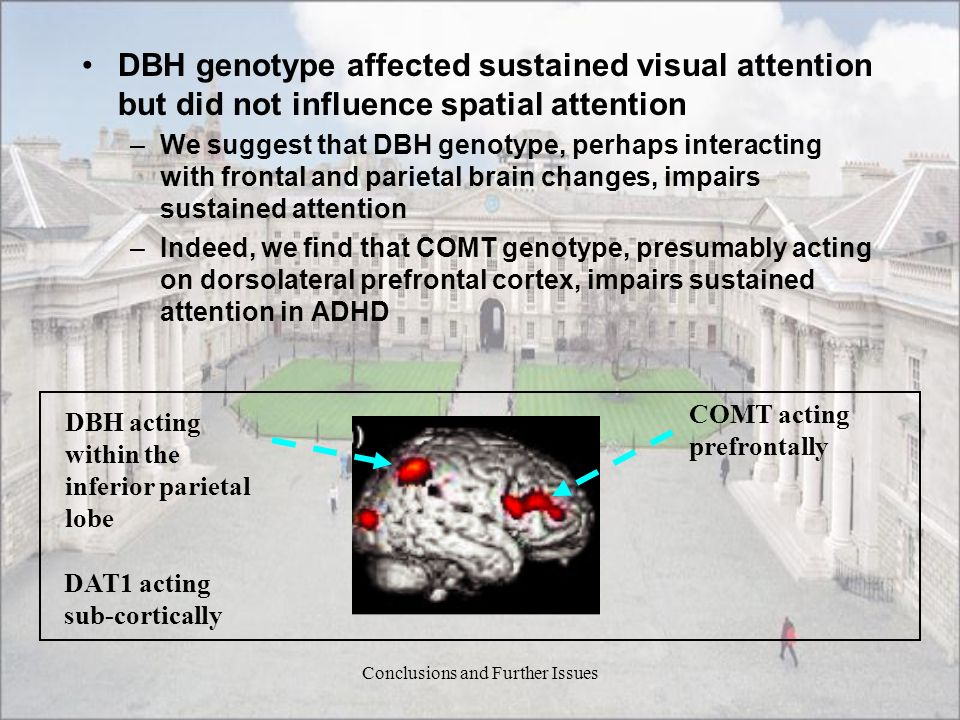 Conclusions and Further Issues DBH genotype affected sustained visual attention but did not influence spatial attention –We suggest that DBH genotype,