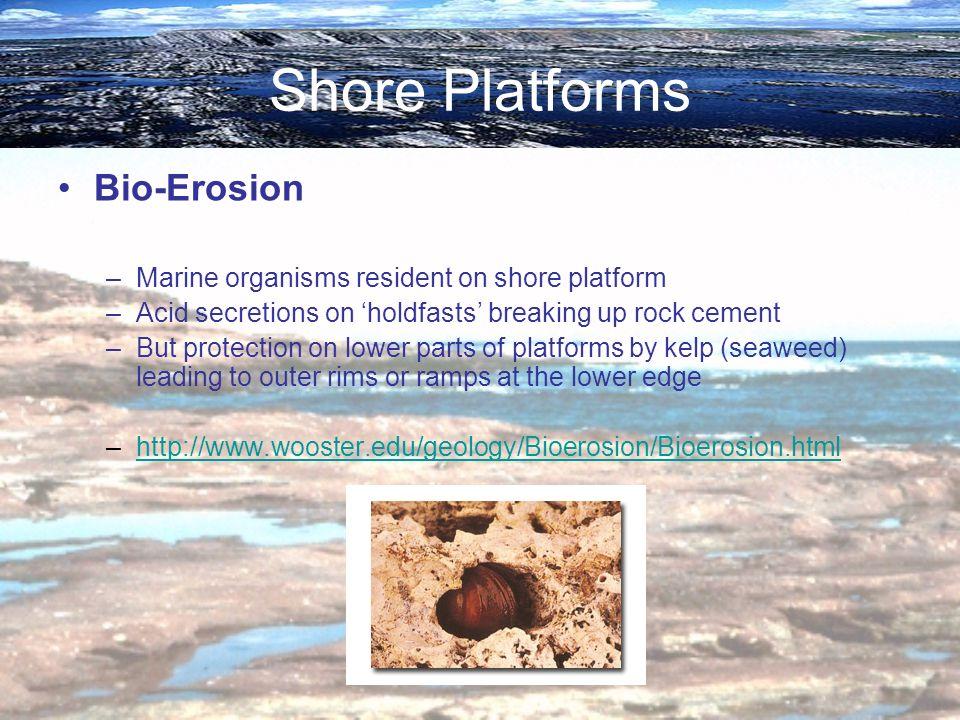 Shore Platforms Bio-Erosion –Marine organisms resident on shore platform –Acid secretions on holdfasts breaking up rock cement –But protection on lowe