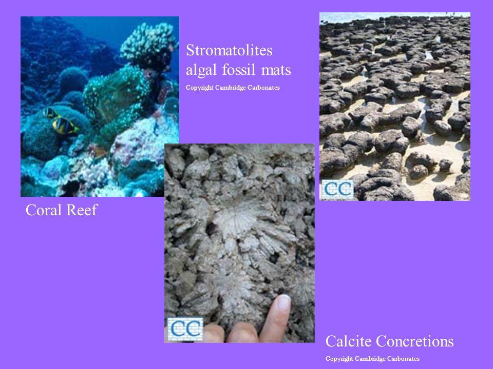 Coral Reef Stromatolites algal fossil mats Copyright Cambridge Carbonates Calcite Concretions Copyright Cambridge Carbonates