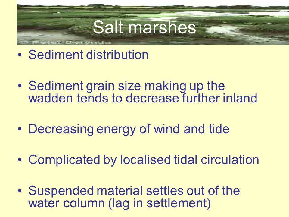 Salt marshes Sediment distribution Sediment grain size making up the wadden tends to decrease further inland Decreasing energy of wind and tide Compli