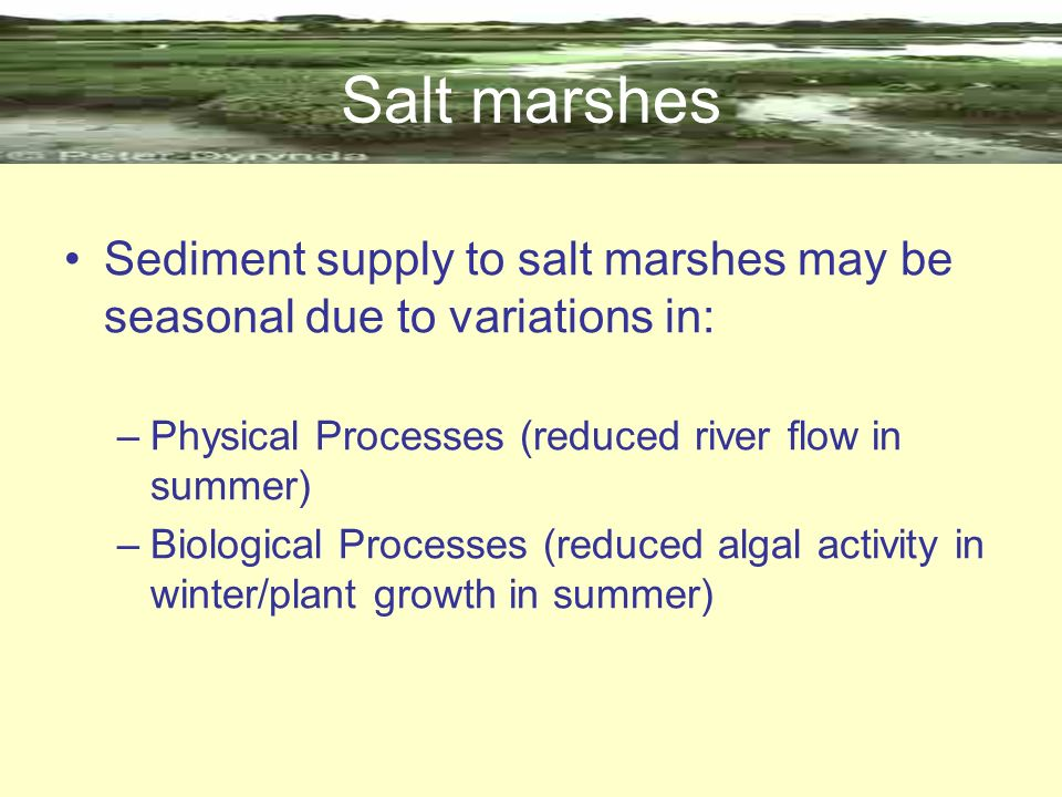 Salt marshes Sediment supply to salt marshes may be seasonal due to variations in: –Physical Processes (reduced river flow in summer) –Biological Proc