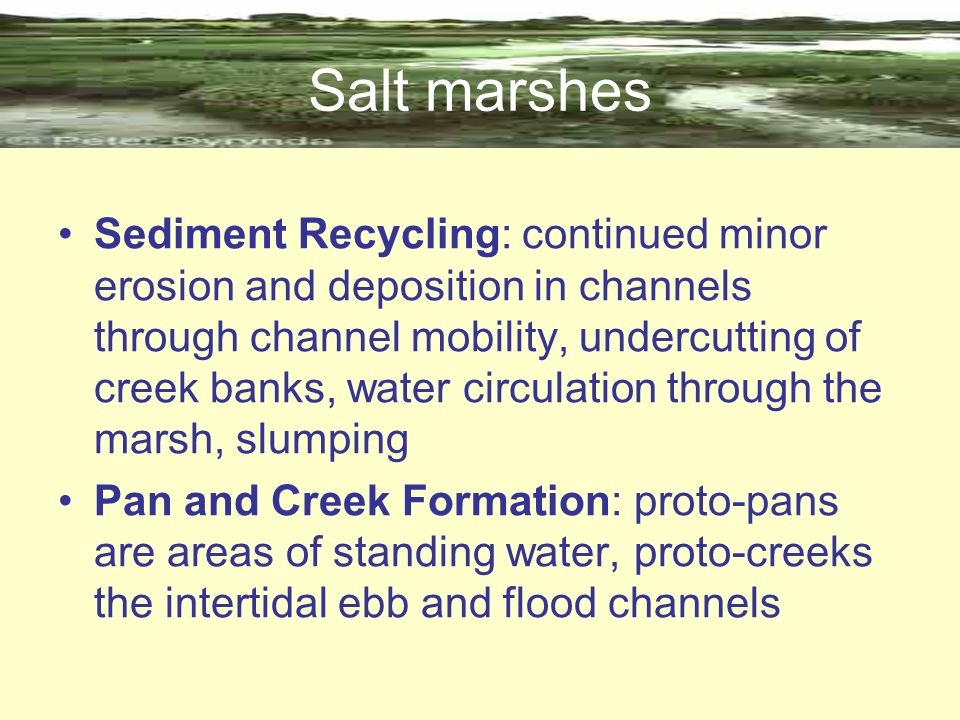 Salt marshes Sediment Recycling: continued minor erosion and deposition in channels through channel mobility, undercutting of creek banks, water circu