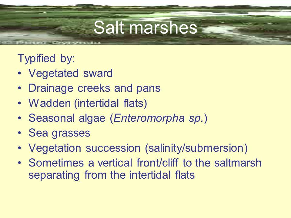 Salt marshes Typified by: Vegetated sward Drainage creeks and pans Wadden (intertidal flats) Seasonal algae (Enteromorpha sp.) Sea grasses Vegetation