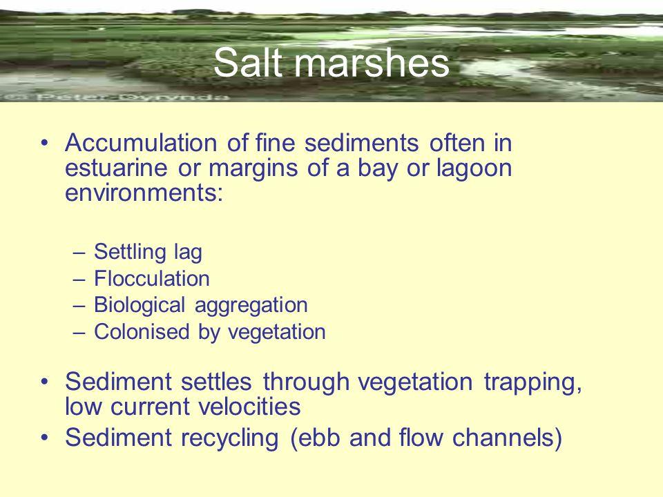 Salt marshes Accumulation of fine sediments often in estuarine or margins of a bay or lagoon environments: –Settling lag –Flocculation –Biological agg