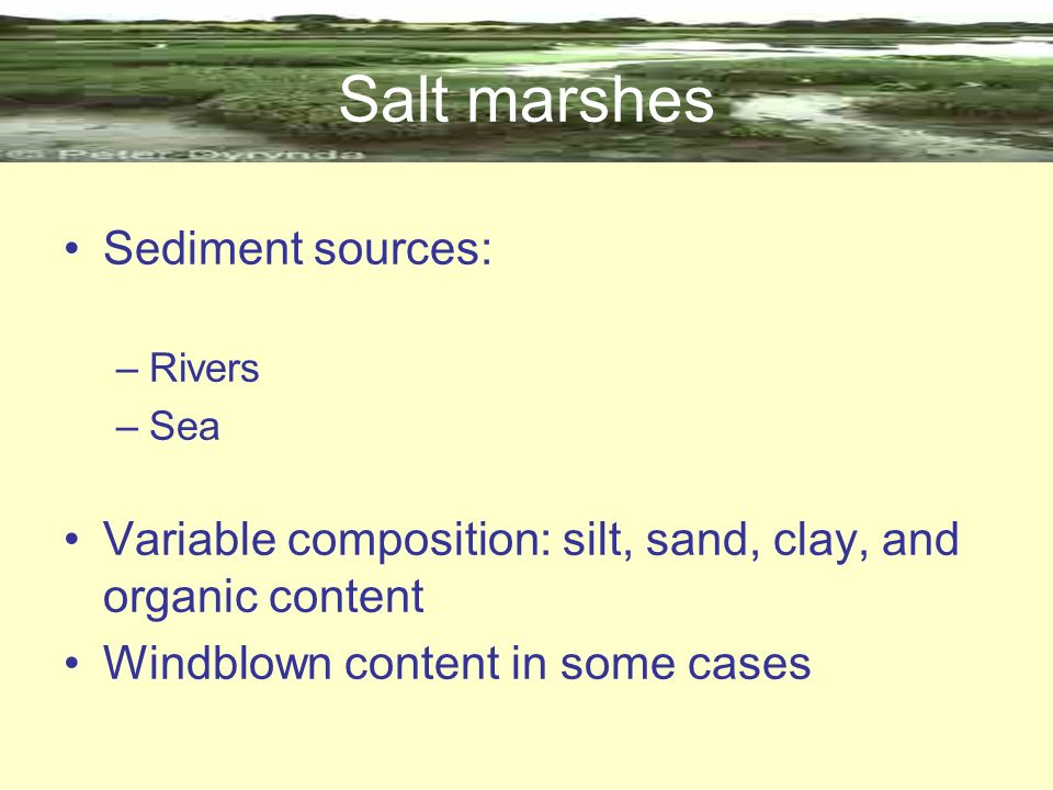 Salt marshes Sediment sources: –Rivers –Sea Variable composition: silt, sand, clay, and organic content Windblown content in some cases