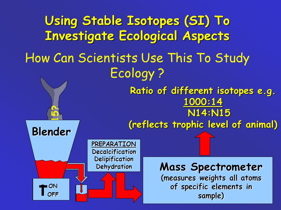N14:N15? Blender ON OFF Blender ON OFF Using Stable Isotopes (SI) To Investigate Ecological Aspects How Can Scientists Use This To Study Ecology ? Mas