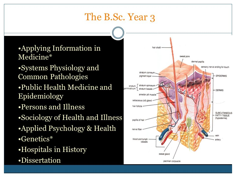 The B.Sc. Year 3 Applying Information in Medicine* Systems Physiology and Common Pathologies Public Health Medicine and Epidemiology Persons and Illne
