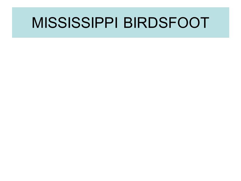 MISSISSIPPI BIRDSFOOT