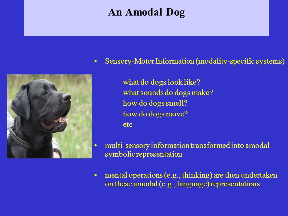 An Amodal Dog Sensory-Motor Information (modality-specific systems) what do dogs look like? what sounds do dogs make? how do dogs smell? how do dogs m