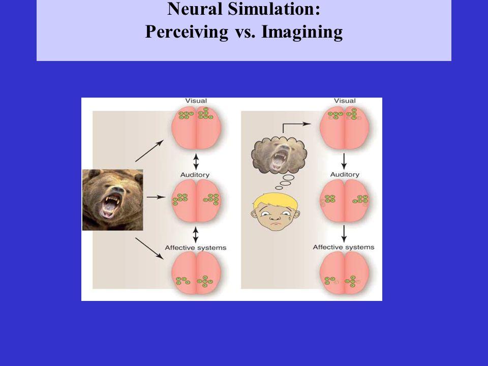 Neural Simulation: Perceiving vs. Imagining