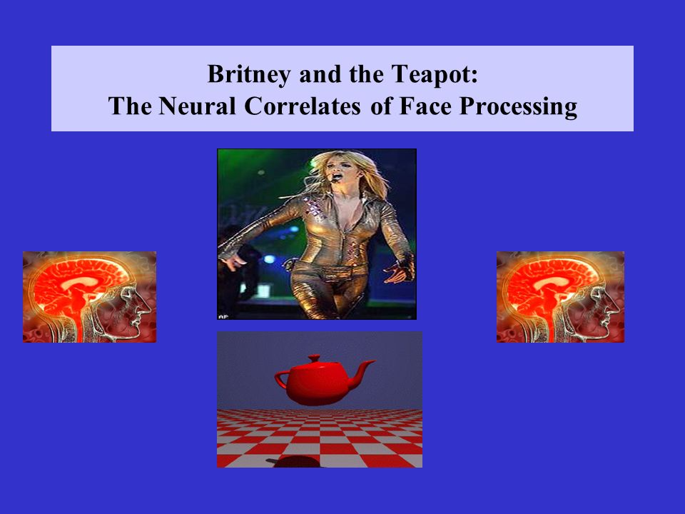 Britney and the Teapot: The Neural Correlates of Face Processing