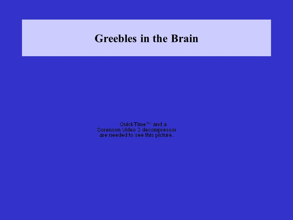 Greebles in the Brain