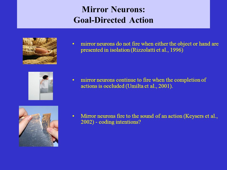 Mirror Neurons: Goal-Directed Action mirror neurons do not fire when either the object or hand are presented in isolation (Rizzolatti et al., 1996) mi