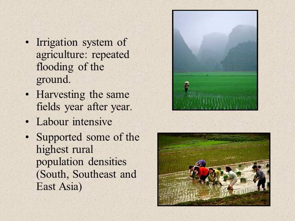Irrigation system of agriculture: repeated flooding of the ground. Harvesting the same fields year after year. Labour intensive Supported some of the