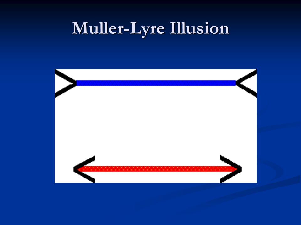 Muller-Lyre Illusion