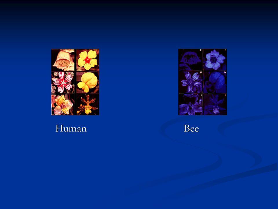 HumanBee
