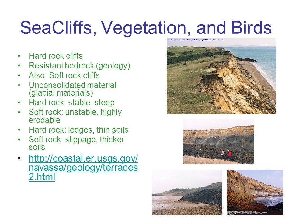 SeaCliffs, Vegetation, and Birds Hard rock cliffs Resistant bedrock (geology) Also, Soft rock cliffs Unconsolidated material (glacial materials) Hard rock: stable, steep Soft rock: unstable, highly erodable Hard rock: ledges, thin soils Soft rock: slippage, thicker soils http://coastal.er.usgs.gov/ navassa/geology/terraces 2.htmlhttp://coastal.er.usgs.gov/ navassa/geology/terraces 2.html