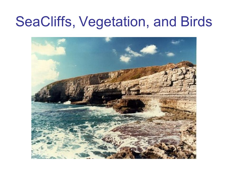 SeaCliffs, Vegetation, and Birds