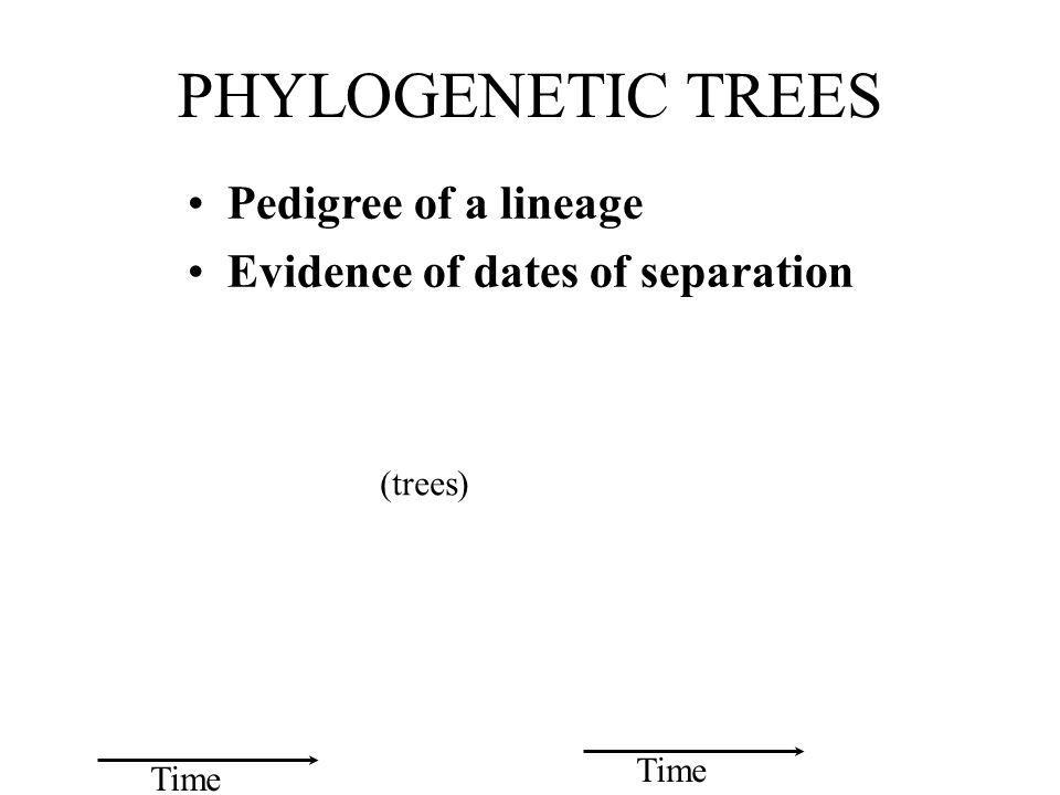 PHYLOGENETIC TREES Pedigree of a lineage Evidence of dates of separation Time (trees)