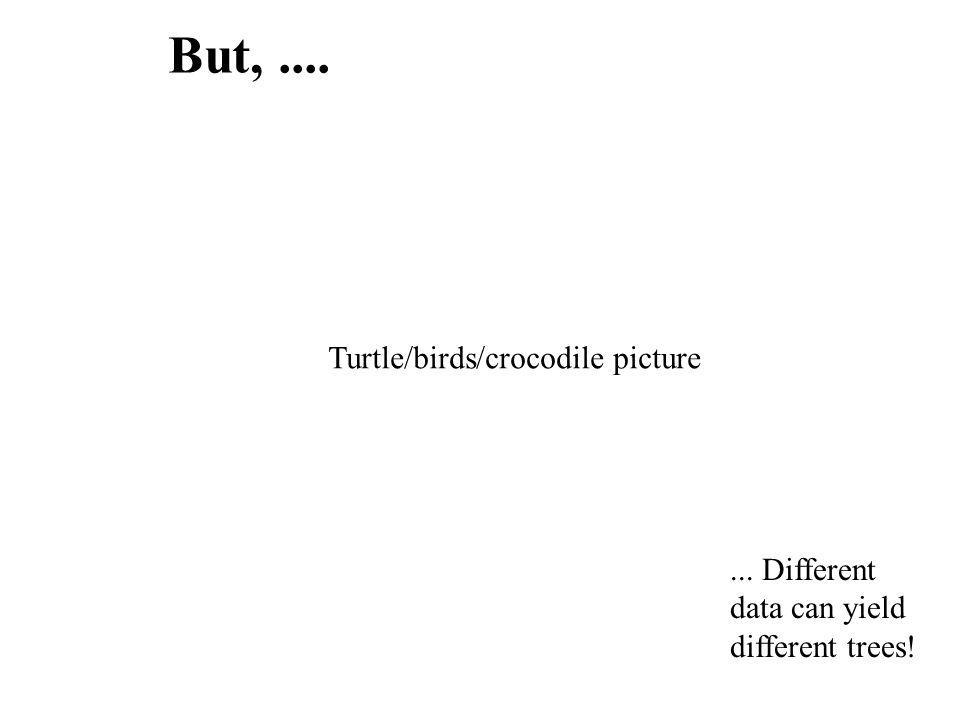 But,....... Different data can yield different trees! Turtle/birds/crocodile picture