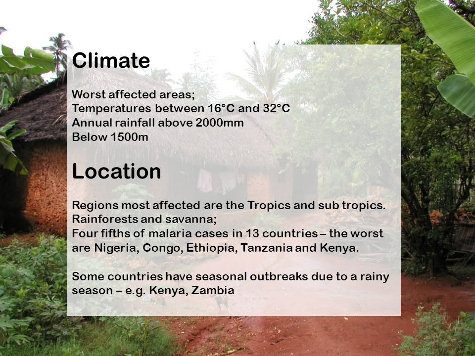 Climate Worst affected areas; Temperatures between 16°C and 32°C Annual rainfall above 2000mm Below 1500m Location Regions most affected are the Tropi
