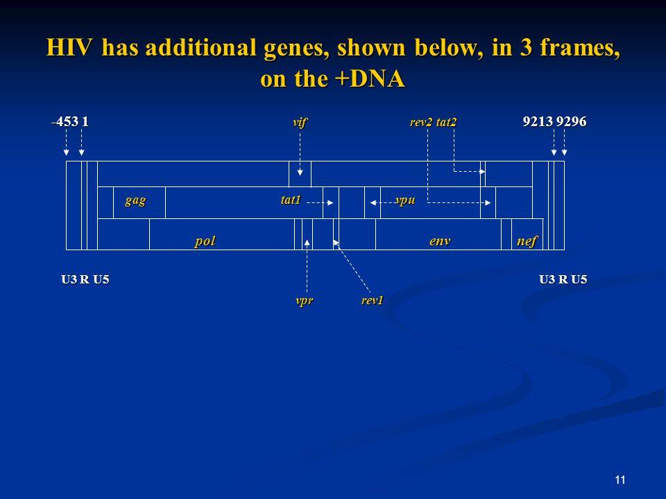 11 HIV has additional genes, shown below, in 3 frames, on the +DNA -453 1 vif rev2 tat2 9213 9296 gag tat1 vpu gag tat1 vpu pol env nef pol env nef U3