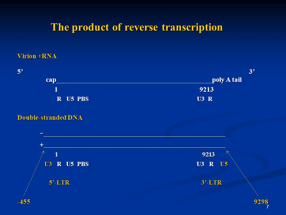 7 The product of reverse transcription The product of reverse transcription Virion +RNA 5 3 cap______________________________________________poly A tail 1 9213 1 9213 R U5 PBS U3 R R U5 PBS U3 R Double-stranded DNA - _________________________________________________________ - _________________________________________________________ +_________________________________________________________ +_________________________________________________________ 1 9213 1 9213 U3 R U5 PBS U3 R U5 U3 R U5 PBS U3 R U5 5-LTR 3-LTR 5-LTR 3-LTR -455 9298