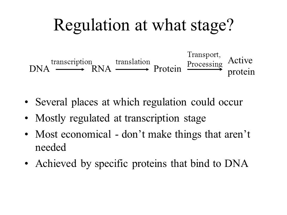Regulation at what stage? Several places at which regulation could occur Mostly regulated at transcription stage Most economical - dont make things th