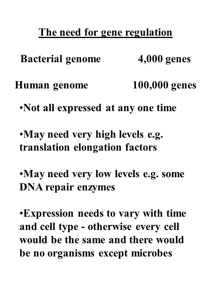 The need for gene regulation Bacterial genome4,000 genes Human genome100,000 genes Not all expressed at any one time May need very high levels e.g. tr