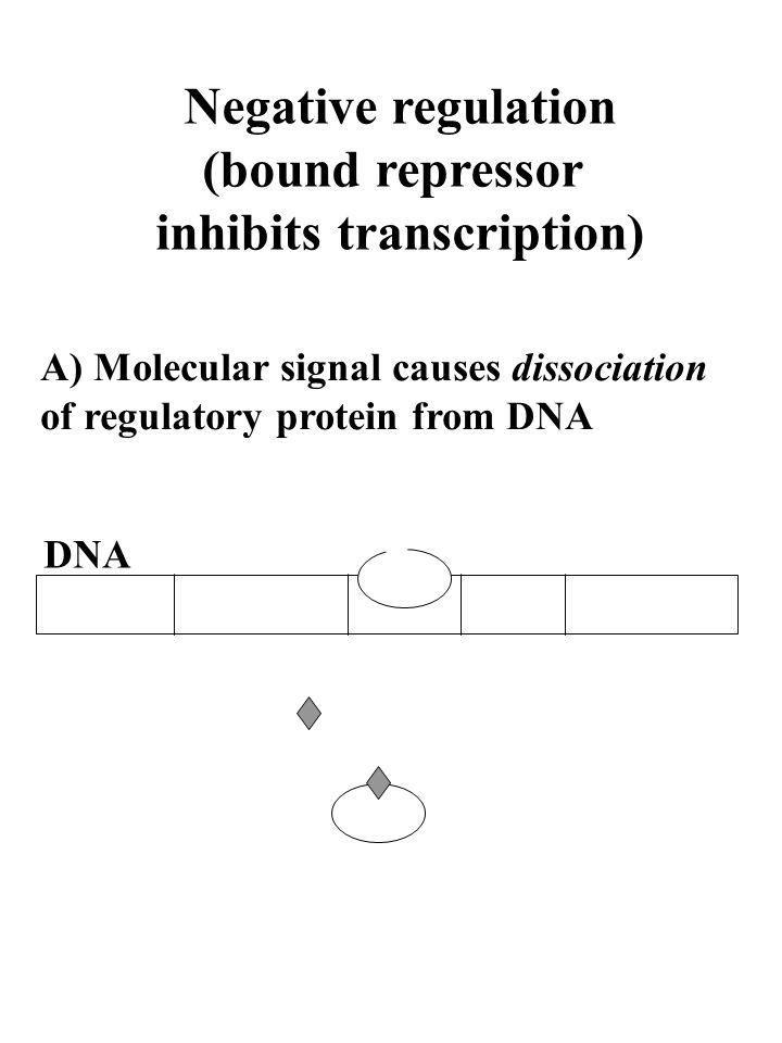 Negative regulation (bound repressor inhibits transcription) A) Molecular signal causes dissociation of regulatory protein from DNA DNA