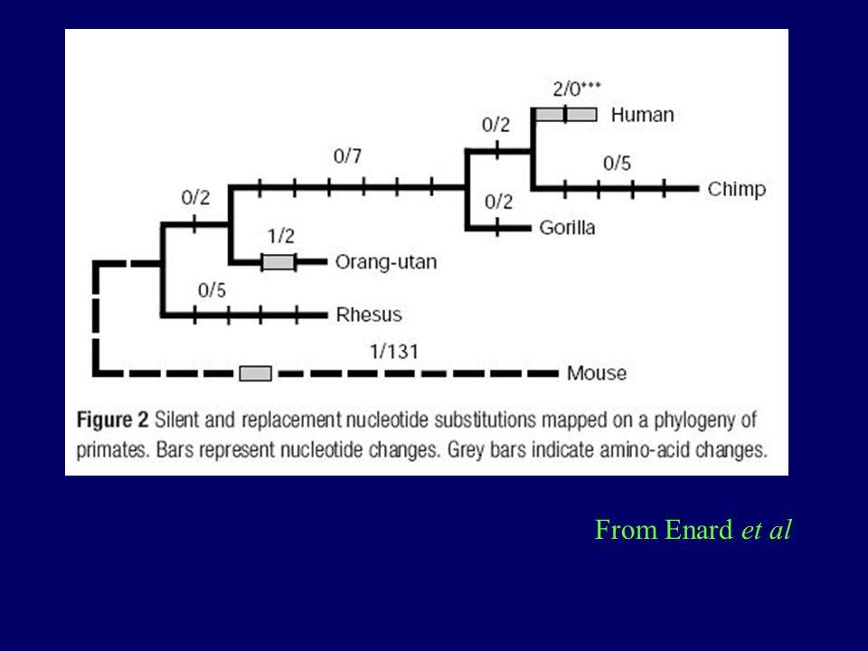 From Enard et al