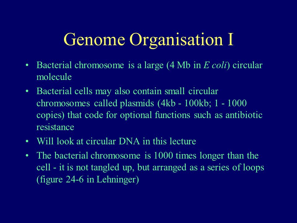 Genome Organisation I Bacterial chromosome is a large (4 Mb in E coli) circular molecule Bacterial cells may also contain small circular chromosomes called plasmids (4kb - 100kb; 1 - 1000 copies) that code for optional functions such as antibiotic resistance Will look at circular DNA in this lecture The bacterial chromosome is 1000 times longer than the cell - it is not tangled up, but arranged as a series of loops (figure 24-6 in Lehninger)