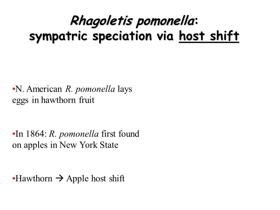 Rhagoletis pomonella: sympatric speciation via host shift N. American R. pomonella lays eggs in hawthorn fruit In 1864: R. pomonella first found on ap