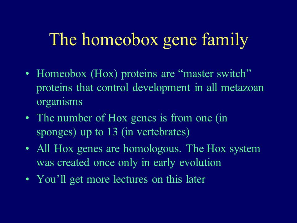 The homeobox gene family Homeobox (Hox) proteins are master switch proteins that control development in all metazoan organisms The number of Hox genes is from one (in sponges) up to 13 (in vertebrates) All Hox genes are homologous.