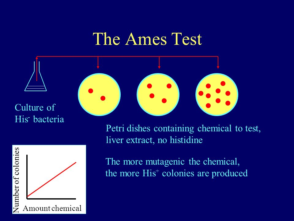 The Ames Test Culture of His - bacteria Petri dishes containing chemical to test, liver extract, no histidine Amount chemical Number of colonies The m
