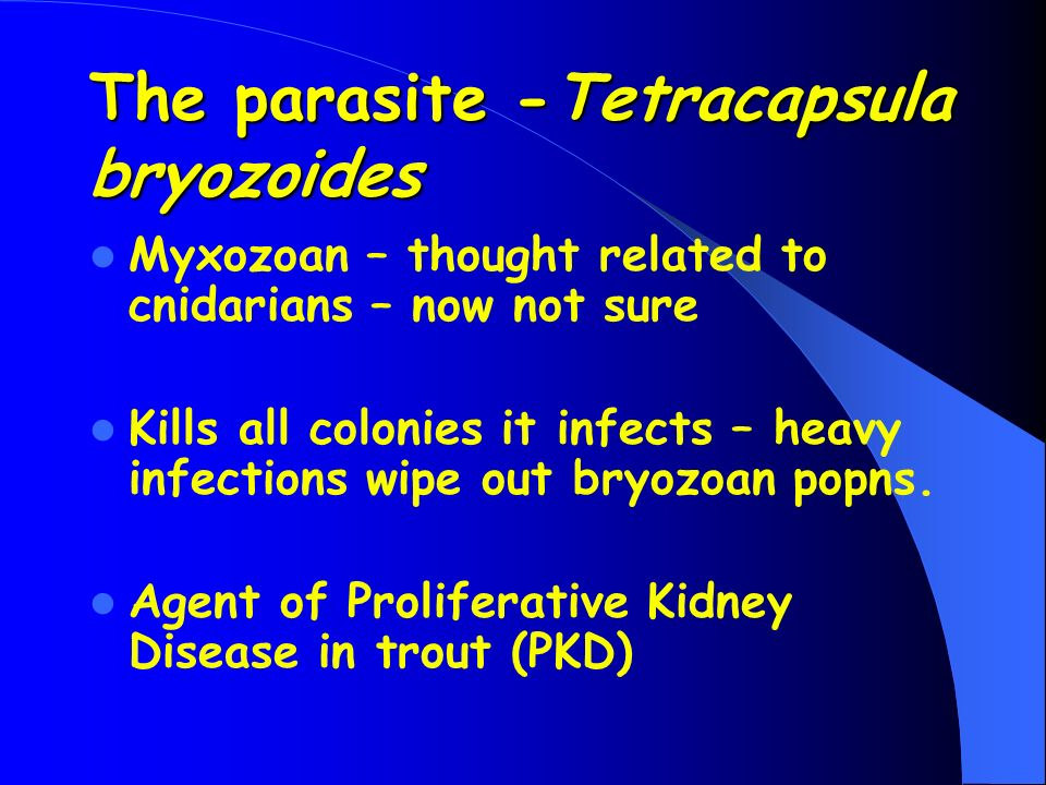 The parasite -Tetracapsula bryozoides Myxozoan – thought related to cnidarians – now not sure Kills all colonies it infects – heavy infections wipe ou