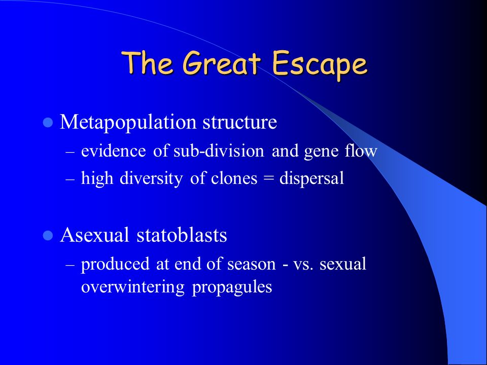 The Great Escape Metapopulation structure – evidence of sub-division and gene flow – high diversity of clones = dispersal Asexual statoblasts – produc