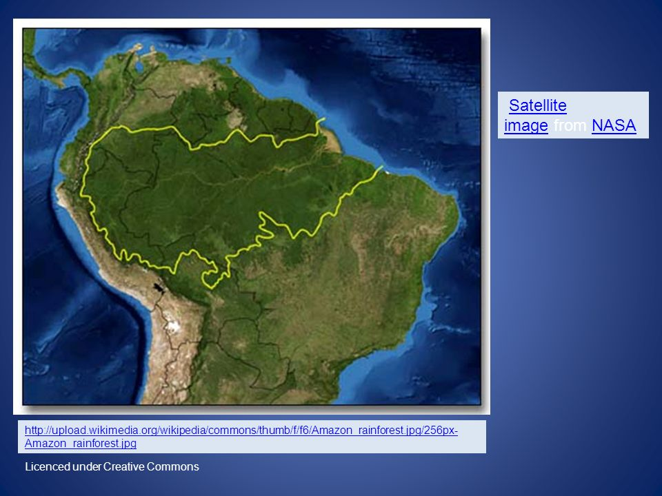 http://upload.wikimedia.org/wikipedia/commons/thumb/f/f6/Amazon_rainforest.jpg/256px- Amazon_rainforest.jpg Satellite image from NASASatellite imageNASA Licenced under Creative Commons