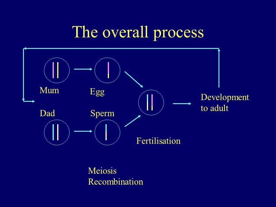The overall process Mum Dad Meiosis Recombination Egg Sperm Fertilisation Development to adult