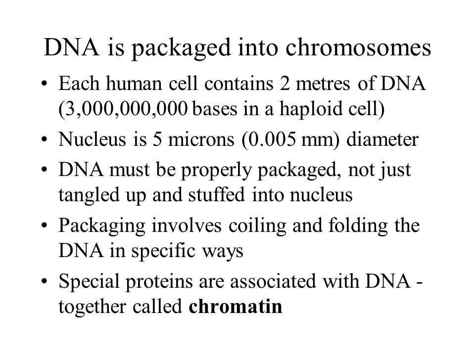 DNA is packaged into chromosomes Each human cell contains 2 metres of DNA (3,000,000,000 bases in a haploid cell) Nucleus is 5 microns (0.005 mm) diameter DNA must be properly packaged, not just tangled up and stuffed into nucleus Packaging involves coiling and folding the DNA in specific ways Special proteins are associated with DNA - together called chromatin