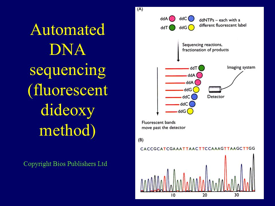 Automated DNA sequencing (fluorescent dideoxy method) Copyright Bios Publishers Ltd