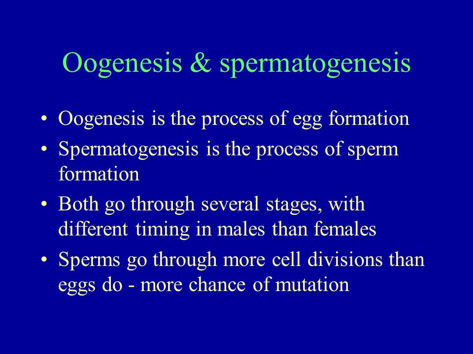 Oogenesis & spermatogenesis Oogenesis is the process of egg formation Spermatogenesis is the process of sperm formation Both go through several stages
