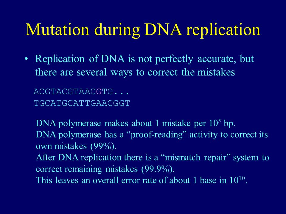 Mutation during DNA replication Replication of DNA is not perfectly accurate, but there are several ways to correct the mistakes ACGTACGTAACGTG... TGC