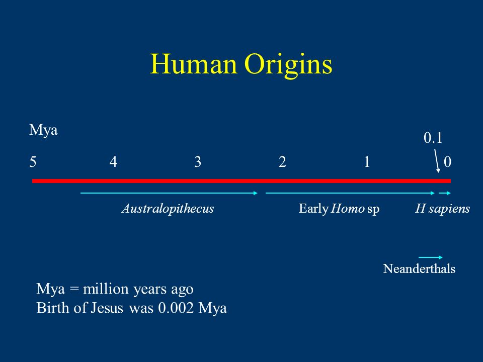 Human Origins AustralopithecusEarly Homo spH sapiens Neanderthals Mya Mya = million years ago Birth of Jesus was Mya