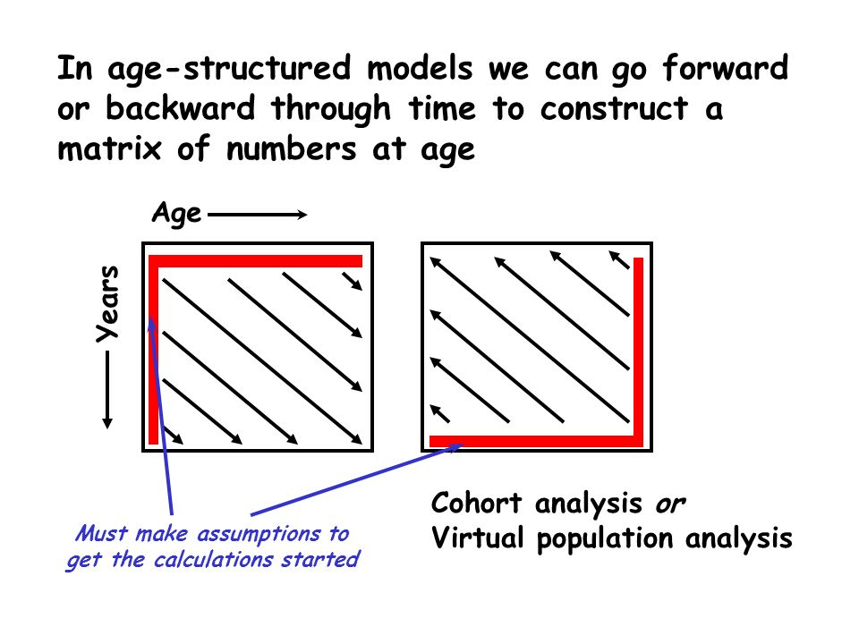 In age-structured models we can go forward or backward through time to construct a matrix of numbers at age Age Years Cohort analysis or Virtual popul