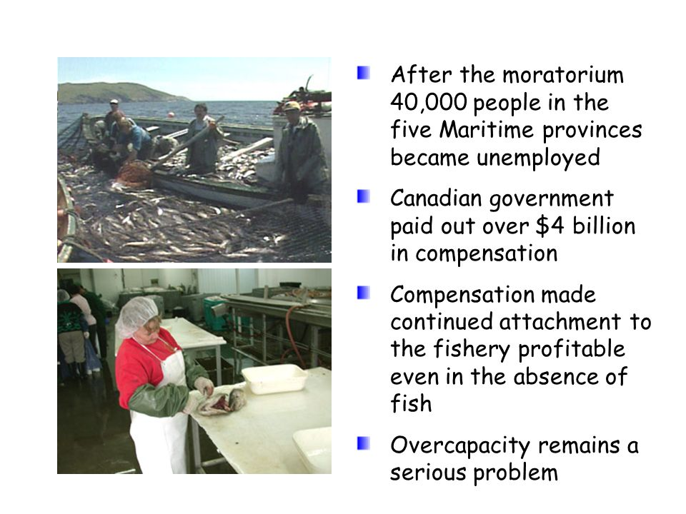 After the moratorium 40,000 people in the five Maritime provinces became unemployed Canadian government paid out over $4 billion in compensation Compe
