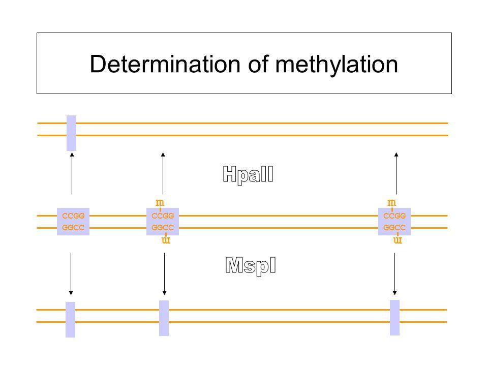 Determination of methylation CCGG GGCC CCGG GGCC CCGG GGCC m mm m