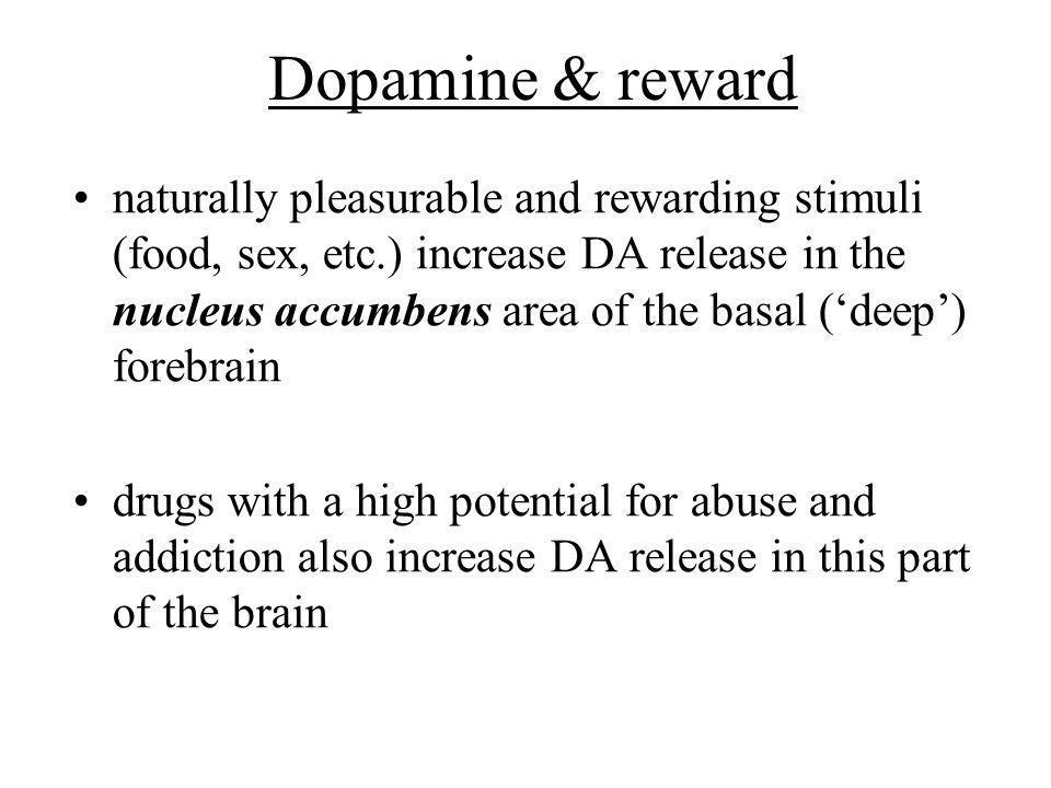 Dopamine & reward naturally pleasurable and rewarding stimuli (food, sex, etc.) increase DA release in the nucleus accumbens area of the basal (deep)
