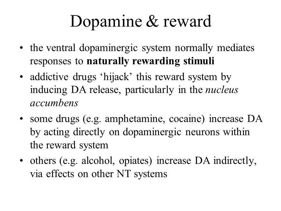 Dopamine & reward the ventral dopaminergic system normally mediates responses to naturally rewarding stimuli addictive drugs hijack this reward system