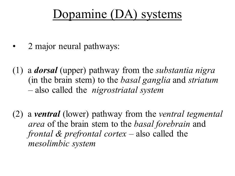 Dopamine (DA) systems 2 major neural pathways: (1) a dorsal (upper) pathway from the substantia nigra (in the brain stem) to the basal ganglia and str